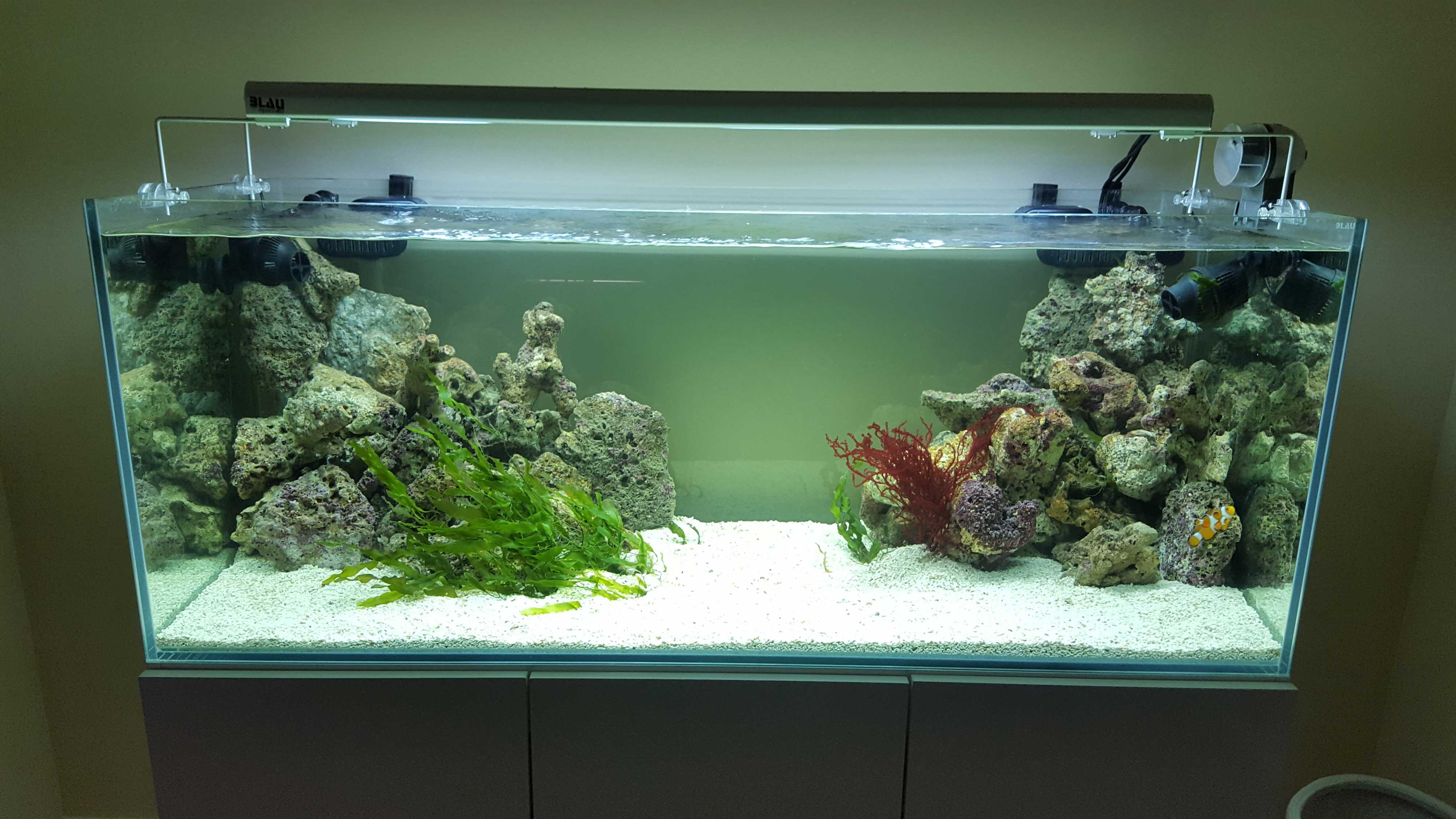 Acuario marino 540 litros elomar acuarios - Decoracion acuario marino ...
